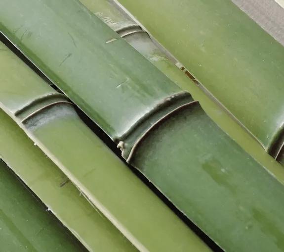 Lamelles de bambou vert