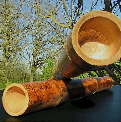 Chaume de bambou brute