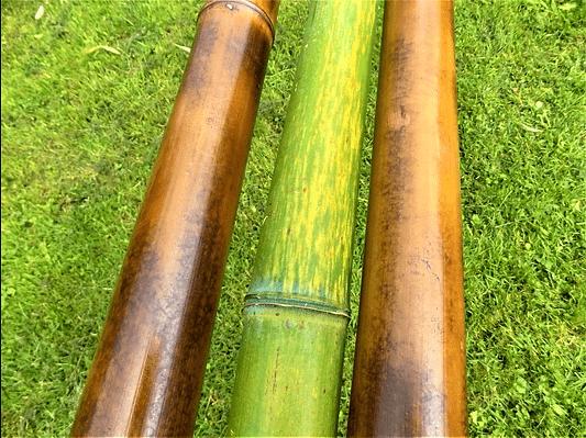 Photo de bambous noirs et bambous verts.